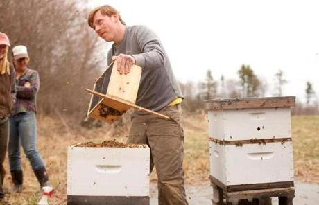 Andrew Harrington of Barrington, R.I., works with Russian honeybees.
